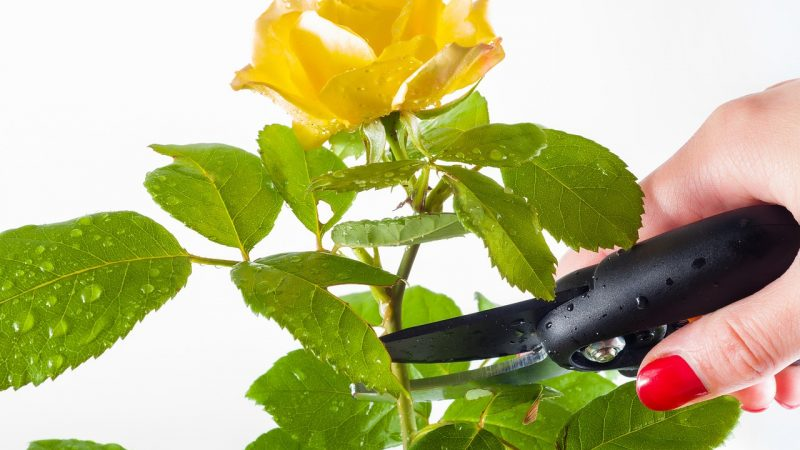 Top Of Seven The Best Tin Snips That Will Be Useful For Gardening